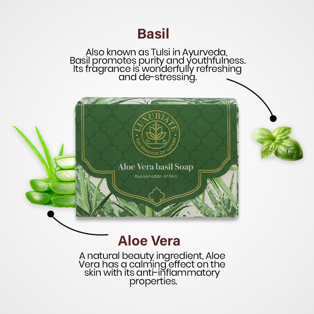 LUXURIATE Naturally Refreshing Aloe Vera and basil Soaps for Rejuvenatioon of Skin for Men and Women, 125 Gm